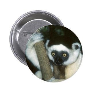 Sifaka (Lemur), Madagascar Button