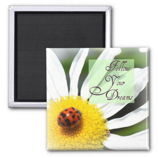Siga su imán de la mariquita de los sueños