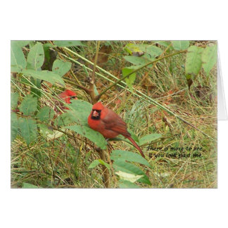 sigh_cardinal_see2_5247 card