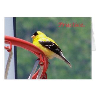 sigh_chickadee_practice_8321 card