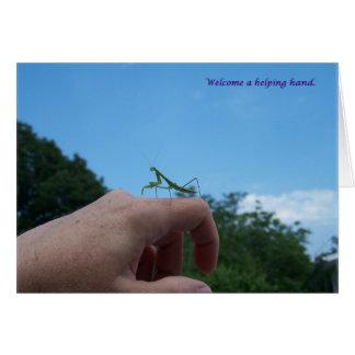sigh_mantis_welcome_9693 card