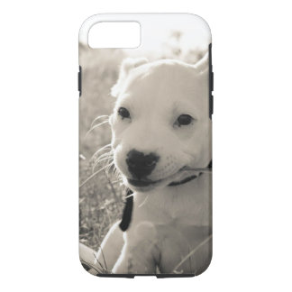 Sight of a puppy dog in summer iPhone 8/7 case