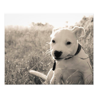 Sight of a puppy dog in summer photo print