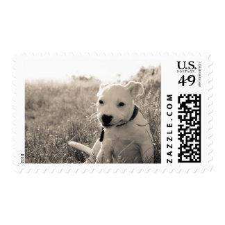 Sight of a puppy dog in summer postage