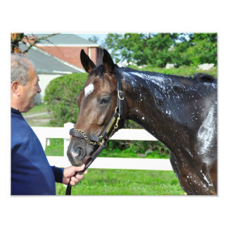Sightseeing Filly Photo Print