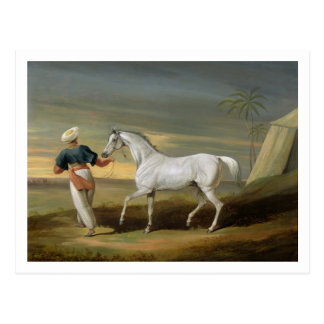 Signal a grey Arab with a Groom in the Desert o Postcards