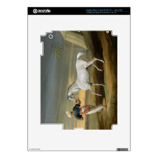 Signal, a grey Arab, with a Groom in the Desert (o Skins For iPad 3