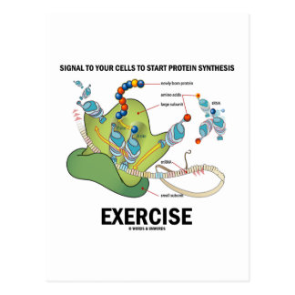 Signal Cells To Start Protein Synthesis Exercise Postcard