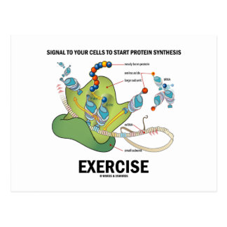 Signal Cells To Start Protein Synthesis Exercise Post Card