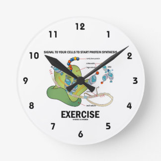 Signal Cells To Start Protein Synthesis Exercise Round Clock