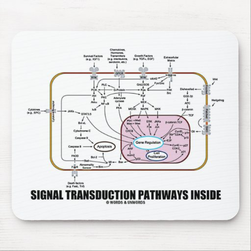 Signal Transduction Pathways Inside (Cell Biology) Mouse Pad