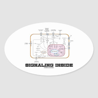 Signaling Inside (Signal Transduction Pathways) Stickers