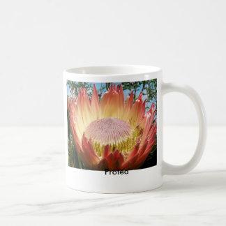 Significado en naturaleza: Protea Taza Básica Blanca