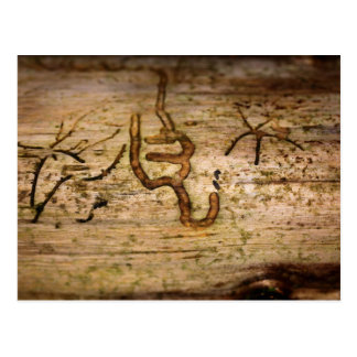 Signs in the Wood - Bark Beetle Traces Postcard