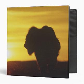 "Sihouette del toro del bisonte en Theodore Carpeta 1 1/2"""