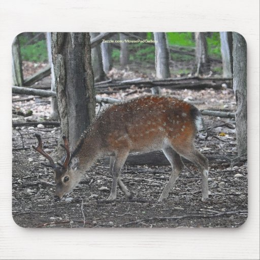 Sika Deer Buck Animal Wildlife Photo Mouse Pad