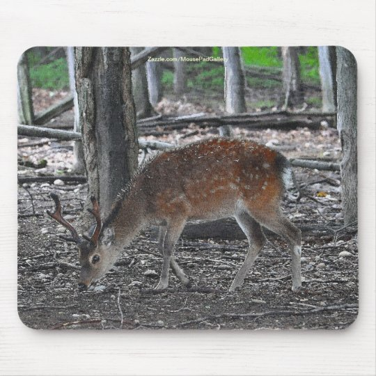 Sika Deer Buck Animal Wildlife Photo Mouse Pad