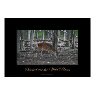 Sika Deer Buck & Forest Wildlife Art Poster