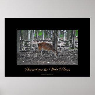 Sika Deer Buck & Forest Wildlife Art Print