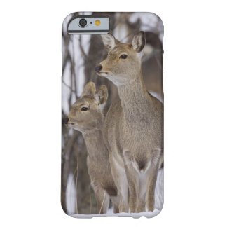 Sika Deer Doe and Young, Hokkaido, Japan Barely There iPhone 6 Case