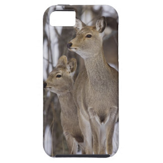 Sika Deer Doe and Young, Hokkaido, Japan iPhone SE/5/5s Case