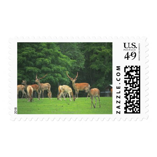 Sika deer standing in a clearing postage stamp