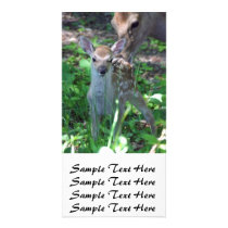 Sika fawn and mother card