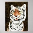 Silent Stalker - Tiger Print print
