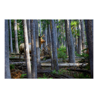 Silent stealth. Wildlife photography Poster