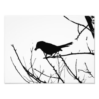 Silhouette Black and White Catbird on Bare Branch Photo Print