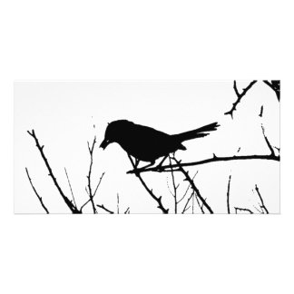 Silhouette Black and White Catbird on Bare Branch Photo Card