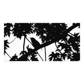 Silhouette Black & White house Wren in Maple Tree Photo Card