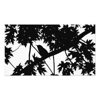 Silhouette Black & White house Wren in Maple Tree Art Photo