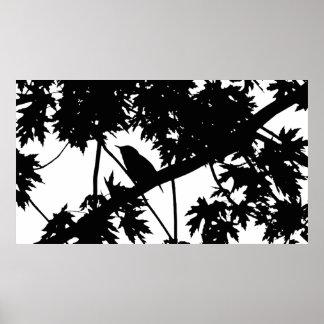 Silhouette Black & White house Wren in Maple Tree Poster