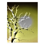 Silhouette of a Dying Tree Post Cards