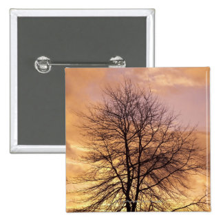 Silhouette of a Tree with Pink and Orange Sky 2 Inch Square Button