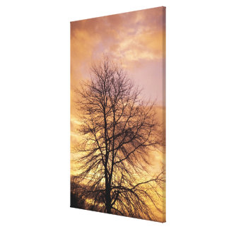 Silhouette of a Tree with Pink and Orange Sky Gallery Wrapped Canvas
