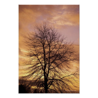 Silhouette of a Tree with Pink and Orange Sky Poster