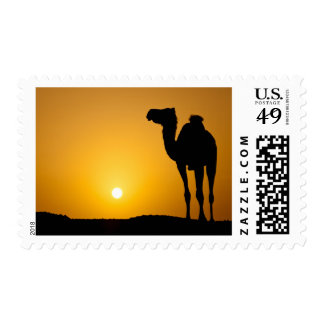 Silhouette of a wild camel at sunset postage