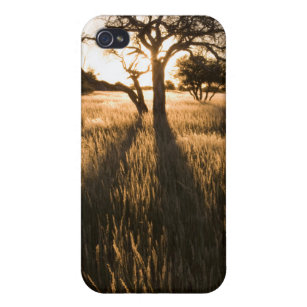 Silhouette Of Acacia Trees In Grass. Mariental iPhone 4/4S Case