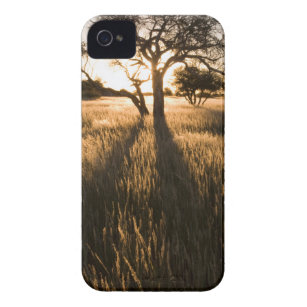 Silhouette Of Acacia Trees In Grass. Mariental iPhone 4 Case-Mate Case