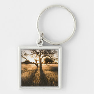 Silhouette Of Acacia Trees In Grass. Mariental Key Chain