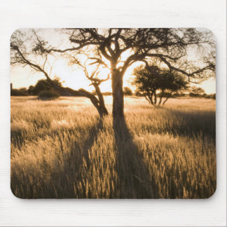 Silhouette Of Acacia Trees In Grass. Mariental Mouse Pad