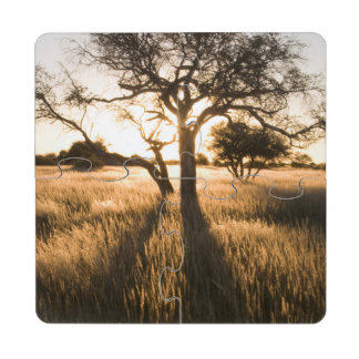 Silhouette Of Acacia Trees In Grass. Mariental Puzzle Coaster