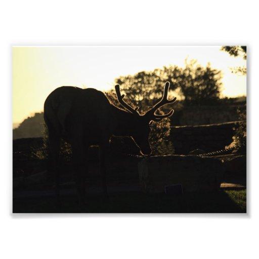 Silhouette of an Elk Art Photo