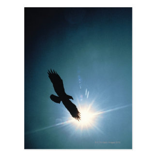 Silhouette of bald eagle flying in sky postcard