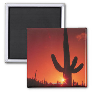 Silhouette of cactus at dusk , Saguaro National 2 Inch Square Magnet