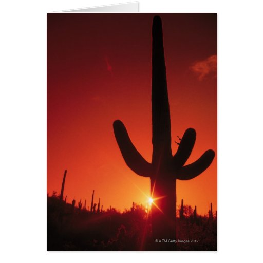 Silhouette of cactus at dusk , Saguaro National Card