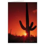 Silhouette of cactus at dusk , Saguaro National Greeting Card