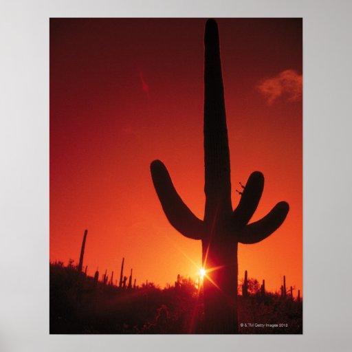 Silhouette of cactus at dusk , Saguaro National Print